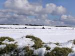 Snow, near Colliford Lake