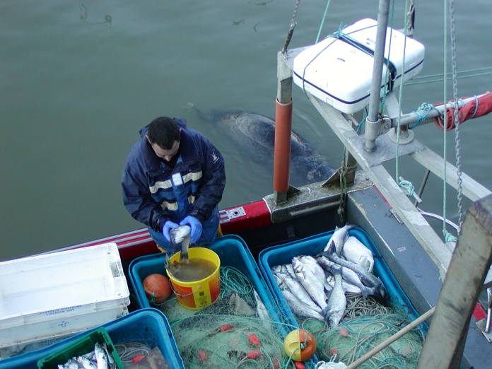 Cleaning the catch