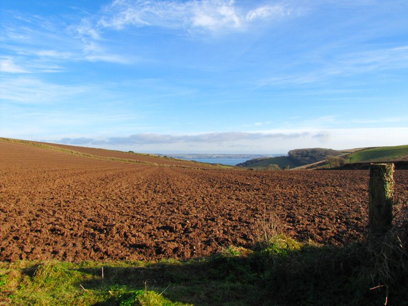 Fields near Polhawn and Wiggle Farm