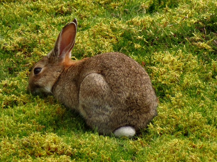 Rabbit, Gold Diggings Quarry